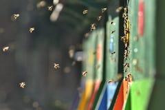 Bijenkorf en vliegende bijen in een vers de lentelicht royalty-vrije stock afbeeldingen