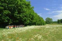 Bijenkorf in het land Royalty-vrije Stock Foto