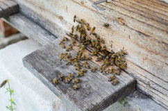Bijenkorf met bijen Royalty-vrije Stock Foto's