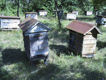 Bijenkorf met bijen in een bijenstal royalty-vrije stock foto
