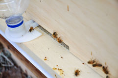Bijenkorf met ingangsvoeder stock fotografie