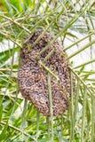 Bijenkorf op boom Stock Foto