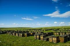 Bijenkorf op het gazon Royalty-vrije Stock Afbeeldingen