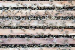 Bijenkorf van bijen Royalty-vrije Stock Fotografie