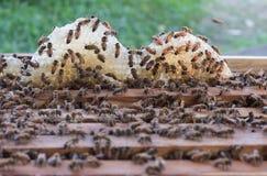 Bijenkorf van bijen Royalty-vrije Stock Foto's
