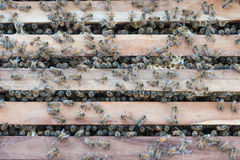 Bijenkorf van bijen Stock Afbeelding