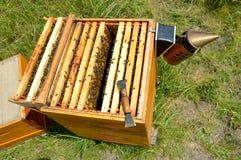 Bijenkorfinspectie Stock Fotografie