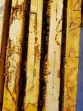 Bijenkorfkaders royalty-vrije stock foto