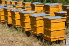 Bijenkorven Stock Fotografie