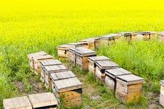 Bijenkorven Royalty-vrije Stock Afbeeldingen