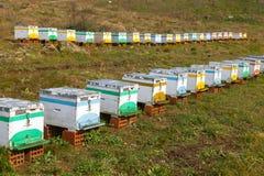 Bijenkorven Stock Foto