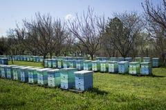 Bijenkorven Stock Afbeelding