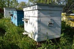 Bijenkorven bij de bijenstal Stock Afbeelding