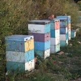 Bijenkorven bij zonsondergang op kust van de Peloponnesus dichtbij het overzees in gree Stock Foto