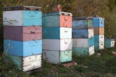 Bijenkorven bij zonsondergang op kust van de Peloponnesus dichtbij het overzees in gree Royalty-vrije Stock Afbeelding