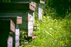 Bijenkorven in de tuin royalty-vrije stock afbeelding