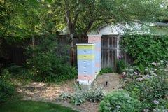 Bijenkorven in de zomer Stock Fotografie