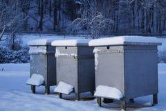 Bijenkorven door Drie Stock Fotografie