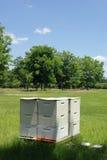 Bijenkorven door een Boomgaard Stock Foto's