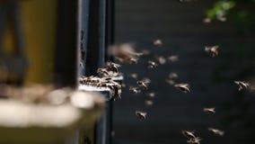 Bijenkorven in een bijenstal stock video