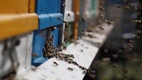 Bijenkorven in een bijenstal stock footage