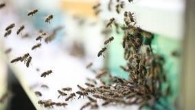 Bijenkorven in een bijenstal stock videobeelden