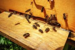 Bijenkorven in een bijenstal met bijen die aan de landende raad in g vliegen royalty-vrije stock fotografie