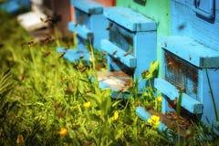 Bijenkorven in een bijenstal met bijen die aan de landende raad in g vliegen stock afbeeldingen