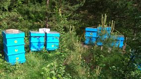 Bijenkorven in het bos bij zonlicht Stock Foto's