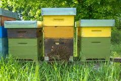 Bijenkorven met bijen Stock Afbeelding