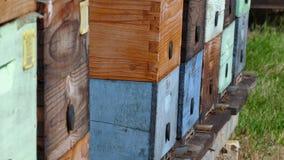 Bijenkorven met honingbijen in de weide stock videobeelden
