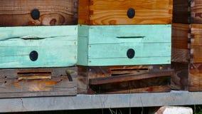 Bijenkorven met honingraatkaders stock videobeelden