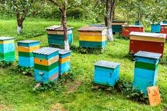 Bijenkorven op de bijenstal Stock Foto's