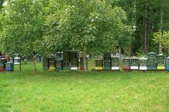 Bijenkorven op de rand van het bos Stock Foto's