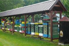 Bijenkorven op de rand van het bos Royalty-vrije Stock Afbeeldingen
