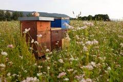 Bijenkorven op een bloemgebied Stock Afbeeldingen