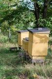 Bijenkorven op een rij royalty-vrije stock foto