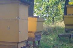 Bijenkorven op een rij Stock Foto's