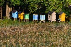 Bijenkorven op een weide Royalty-vrije Stock Afbeeldingen