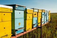 Bijenkorven op het gebied Stock Afbeelding