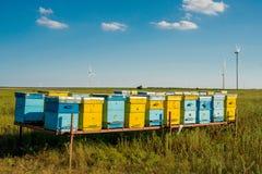 Bijenkorven op het gebied Stock Fotografie
