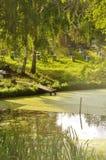 Bijenkorven op het meer Royalty-vrije Stock Fotografie
