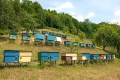 Bijenkorven op weide Royalty-vrije Stock Foto's