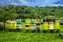 Bijenkorven op weide in platteland van Montenegro Stock Afbeeldingen