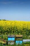 Bijenkorven in open royalty-vrije stock foto's