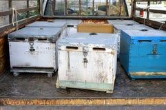 Bijenkorven van bijen Stock Foto's
