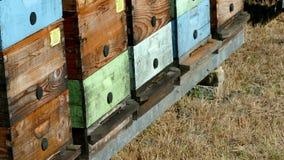 Bijenkorven van honingbijen stock video