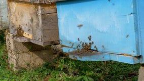 Bijenlandbouwbedrijf in het dorp in de zomer stock footage