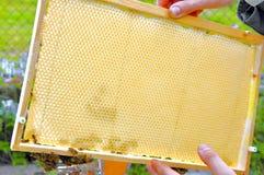 Bijenpatroon Stock Afbeelding