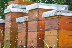 Bijenstal Stock Afbeeldingen